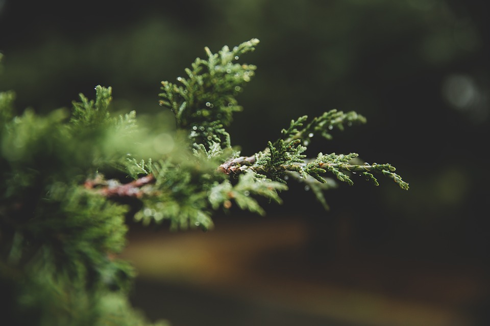 Evergreen SEO